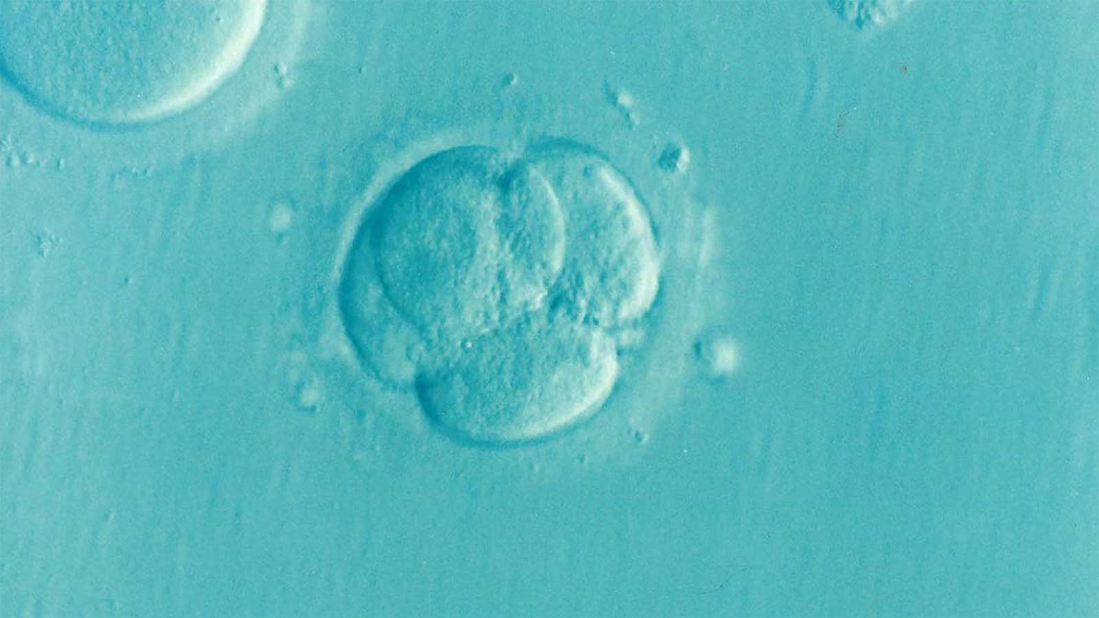 Genetically Modified Humans and Embryos, a Soon to Be Reality