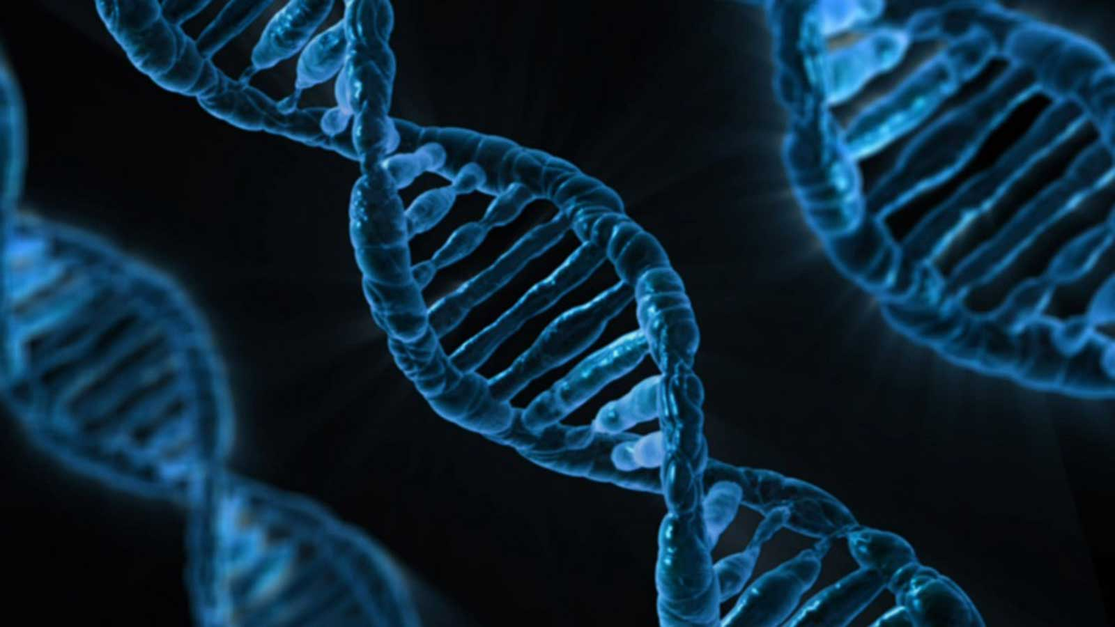10 Examples of Genetic Engineering We Already Have
